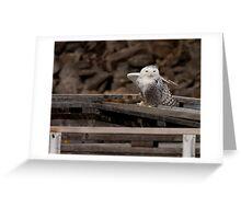 Snowy Owl - Ottawa, ON Greeting Card