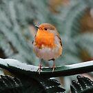 Robin on bench by LisaRoberts