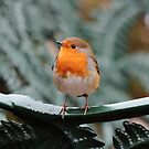 Robin on bench by LisaRoberts