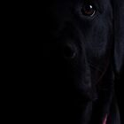 Black Lab by Alan May