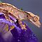 NEW OCTOBER 2013 AVATAR CHALLENGE - BUGS AND ANIMALS ON FLOWERS IN MACRO