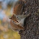 Up a Tree by by Marvil LaCroix