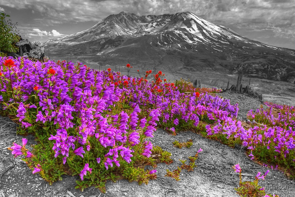 Color from Chaos - Selective Coloring by JamesA1