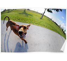 Weiner Dog In The Park Poster