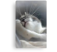Sully Sunning © Vicki Ferrari Photography Canvas Print