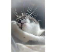 Sully Sunning © Vicki Ferrari Photography Photographic Print