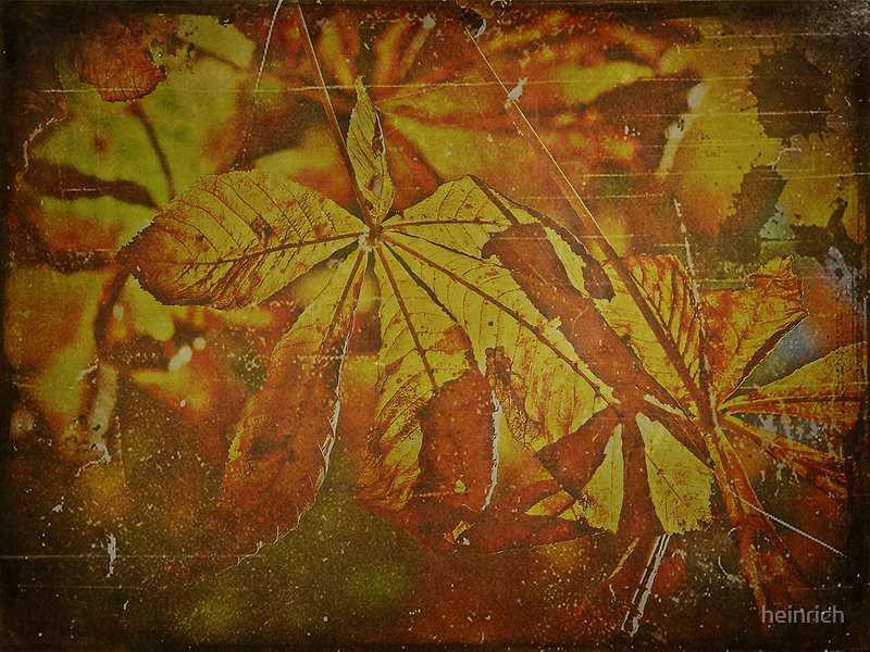 Chestnut leaves by heinrich