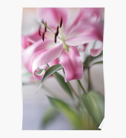 Pink Lily Poster
