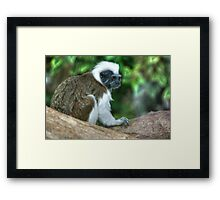 Cotton Top Framed Print