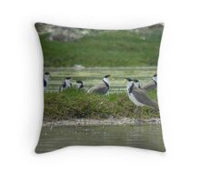 Masked Lapwings (Vanellus miles) - Coffin Bay, South Australia Throw Pillow