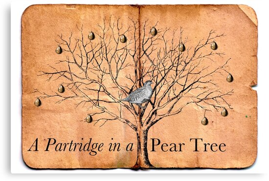 A Partridge in a Pear Tree by Claire Dimond