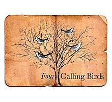 Four Calling Birds Photographic Print