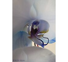 Unusual coloured orchid Photographic Print