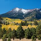 Lockett Meadow - Panoramic by Candy Gemmill