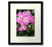 Beautiful Wild Roses Framed Print