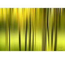 Northern Forest Abstract Photographic Print