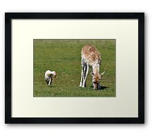 Big And Small Friends! Framed Print