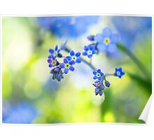 Forget me not Canvas Poster