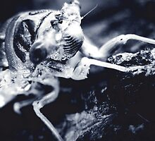 The Locust 2 by garamer