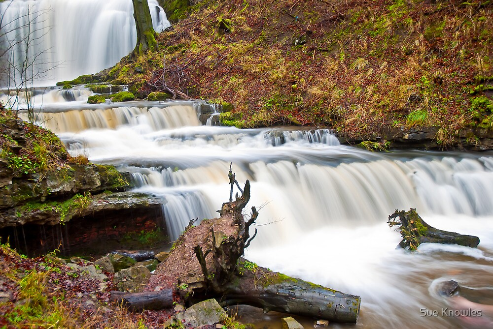 Scalebar Force by Sue Knowles