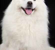 White Dog Sticker