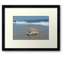 Seashell on the sand and ocean 3 Framed Print