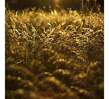 Let it Glow, Olney, UK Photographic Print