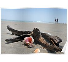 Seashell on the sand and ocean wih driftwood Poster