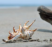 Seashell on the sand and ocean 8 by Anton Oparin