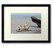 Seashell on the sand and ocean 8 Framed Print