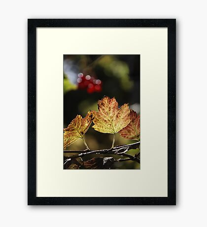 West Sweden Autumn colour Framed Print