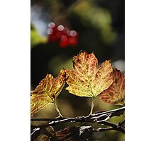 West Sweden Autumn colour Photographic Print