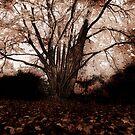 autumn by noor786