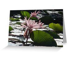 Water Lillies - Broome, Western Australia Greeting Card