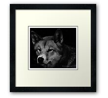 Canine portrait in b/w Framed Print