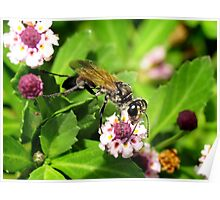 A Wasp On A Flower.... Poster
