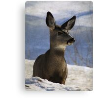 Female Mule Deer Canvas Print