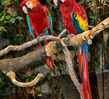 Birds of a Feather by Jim  Egner