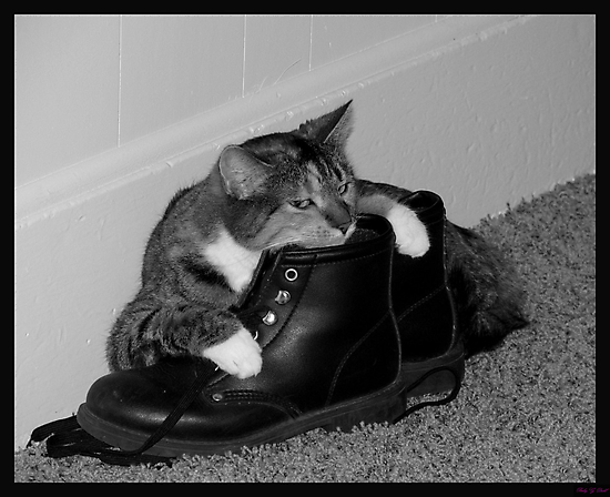 Long Day's work..time to relax on mom's boots~!!! by Brenda Dahl