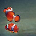 Clownfish by SarahMistake