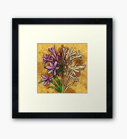 Agapanthus (floral) Framed Print