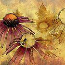 Floral Fantasies by Barbara Glatzeder
