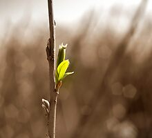 New growth by Cleber Photography Design