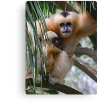 White Cheeked Gibbon and Infant Canvas Print