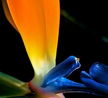 Magnificent Bird of Paradise by Renee Hubbard Fine Art Photography