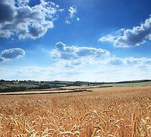 corn fields by markphotos1964