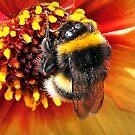 Honey Bee by naturelover