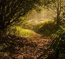 Early morning autumnal woodland by Dale Batchelor
