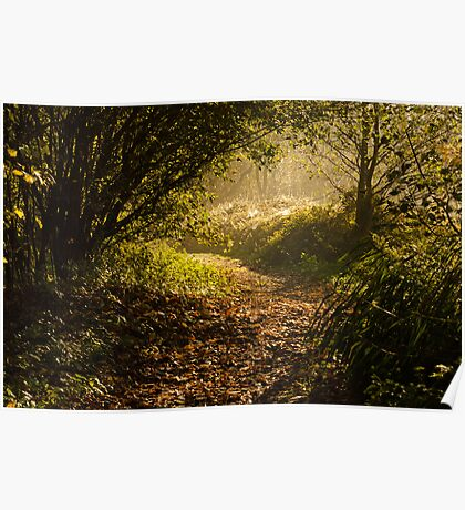 Early morning autumnal woodland Poster
