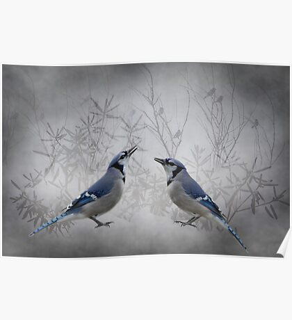 Two Jays Poster